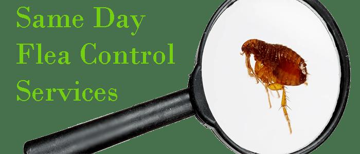 Same Day Flea Control Services