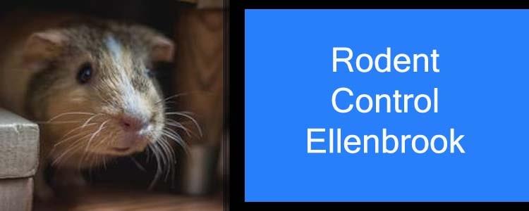 Rodent Control Ellenbrook